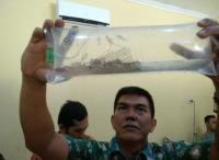 KKP Gagalkan Penyelundupan Benih Lobster Senilai Rp37 Miliar di Jambi