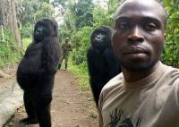 Bergaya <i>Cool</i>, 2 Gorila Ini Ikut Selfie dengan Tim Anti-Perburuan di Kongo
