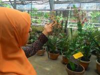 Di Eks Lokalisasi Dolly Surabaya Akan Dibangun Kebun Wisata Anggrek