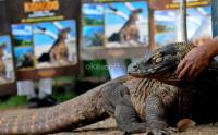 Ada Perdagangan Ilegal, KLHK Perkuat Penjagaan Satwa Langka Komodo