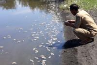 Hindari Bau Tak Sedap, Ribuan Ikan yang Mati di Pantai Trisik Kulonprogo Akan Dikubur