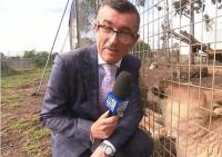 Jurnalis TV Basah Kuyup Dikencingi Singa saat Liputan