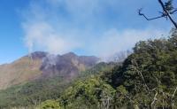 141,6 Hektare Kawasan Hutan Gunung Rinjani Terbakar
