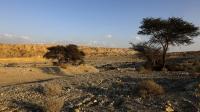 Israel Dilanda Panas Ekstrem, Suhu Hampir Mencapai 50 Derajat Celscius di Sodom
