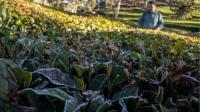 Tanaman Rusak Akibat Suhu Dingin Ekstrem, Petani Sebut Tahun Ini Lebih Parah
