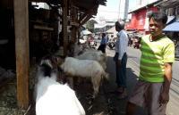 Keluh Kesah Penjual Hewan Kurban di Tanah Abang