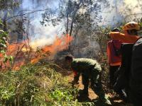 Kebakaran Hutan Gunung Panderman Meluas hingga 60 Hektar