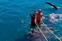 Dua Pria Menunggangi Hiu Paus Picu Kemarahan Warganet Meksiko