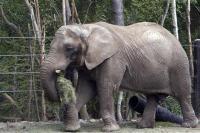 Denmark Keluarkan Rp17 Miliar Demi Pensiunkan Empat Gajah dari Sirkus