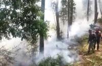 Hutan Kawasan Wisata Gedong Songo Terbakar