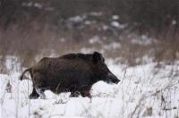 Pria Italia Tembak Mati Ayahnya saat Berburu Babi Hutan