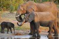 Berlian dan Gajah Berperan Penting Tentukan Pemenang Pemilu Bostwana