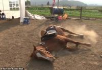 Akal-akalan Kuda Pemalas, Pura-Pura Mati Setiap Ditunggangi