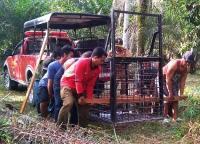Petugas Usir Beruang Pakai Petasan saat Masuk ke Perkebunan Warga
