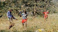 PBB Serukan Bantuan Internasional Perangi Gerombolan Belalang di Afrika Timur