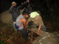 Lagi, Gajah Sumatera Terkena Jerat di Hutan Tanaman Industri Riau