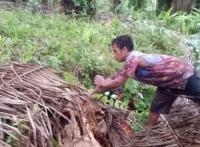 Kawanan Pencuri Buah Sawit di Kotawaringin Barat Dibekuk Polisi