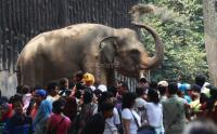 Taman Margasatwa Ragunan Bakal Batasi Jumlah Pengunjung dengan Sistem <i>Online</i>