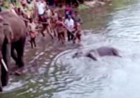 Seekor Gajah Hamil Mati karena Buah Berisi Petasan, Timbulkan Kemarahan di India
