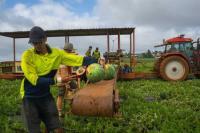 Aplikasi Backpicker Hubungkan Pekerja dan Pemilik Lahan Pertanian di Australia