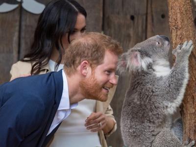 Kunjungi Australia, Pangeran Harry dan Meghan Markle Antusias Bertemu Koala
