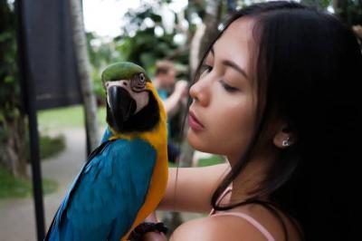 Bali Bird, Tempat Wisata yang Manjakan Pecinta Burung
