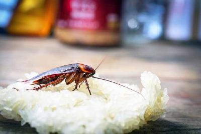Meski Menjijikkan, Kecoa Ternyata Banyak Manfaatnya untuk Kesehatan!