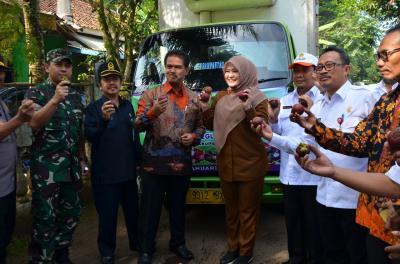 Indonesia Ekspor Manggis dari Pandeglang ke China