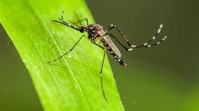 Cara Mudah Basmi Nyamuk di Rumah Tanpa Fogging