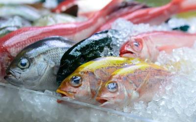 Jangan Asal, Begini Cara Higienis Mencairkan Ikan Beku