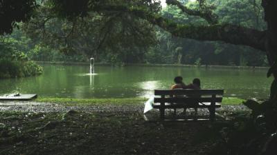 Akan Ada Kebun Raya Khusus Bakau di Surabaya