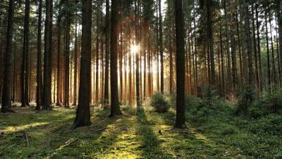 Ingin Menikmati Hutan di Jakarta? Bisa Kok