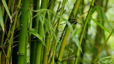 Bambu Bisa Jadi Solusi Isu Sampah Plastik Sekali Pakai