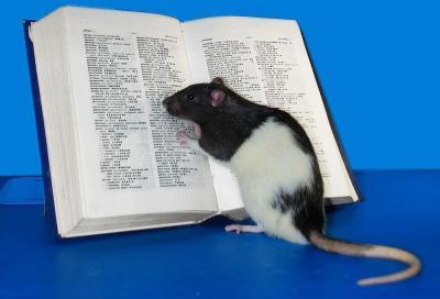 Punya Kemampuan Lengkap, Ini 4 Fakta kalau Tikus Hewan yang Cerdas