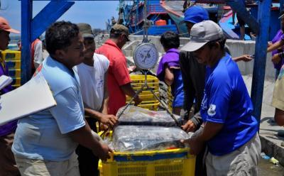 Pemerintah Tebar 2.000 Benih Kakap Putih di Perairan Anambas