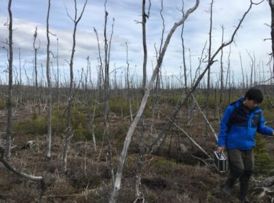 NASA Teliti Dampak Kebakaran Hutan Arktik di Alaska