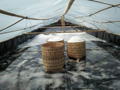Ada 10.000 Ha Tambak Garam di Kupang, Masih Perlu Impor?