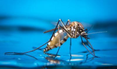 Hari Nyamuk Sedunia, Kenali Jenis Nyamuk dan Penyakit yang Dibawanya