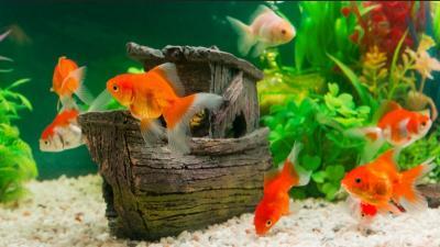 5 Tips Membeli Ikan Hias biar Enggak Ketipu