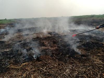 Polisi Tangkap Pelaku Pembakaran Lahan Seluas 2 Hektare di Kalsel