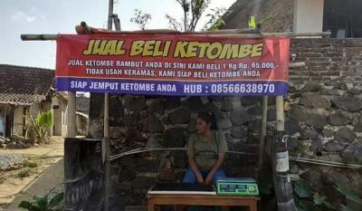 Viral Bisnis Jual Beli Ketombe Rp65 Ribu per Kg, Kisah di Baliknya Bikin Haru