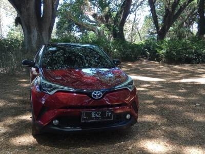 Viral Harga Kepiting Salju Ini Lebih Mahal dari Toyota C-HR Hybrid