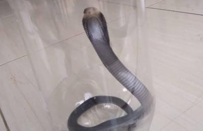Dipatuk Anak Kobra, Pedagang Sayur Dirawat di RSUD Depok