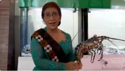 Susi Beberkan Tarif Penyelundupan Benih Lobster, ke Jakarta Rp115 Juta Koper