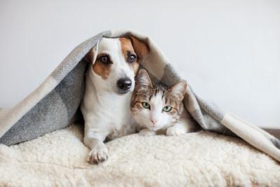 Seberapa Penting Vaksin untuk Anjing dan Kucing?