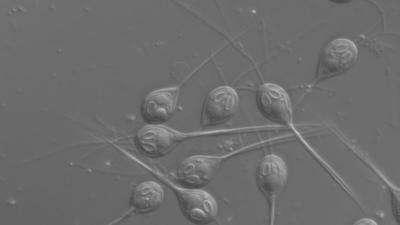 Ilmuwan Temukan Hewan yang Tak Menghirup Oksigen