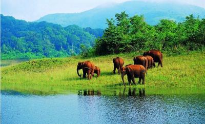 5 Spot Terindah Melihat Aksi Gajah Liar, Indonesia Juga Ada Loh