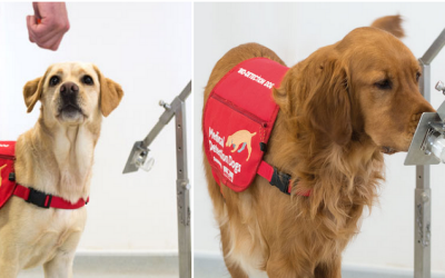 Anjing Bakal Dikerahkan untuk Melacak Orang yang Terinfeksi Corona